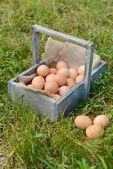 Eggs in wooden basket — Stock Photo