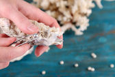 Hand with tweezers holding pearl and oyster — Foto de Stock