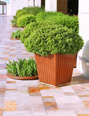 Garden flower pots — Stock Photo
