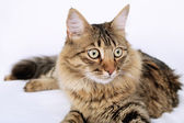 Beautiful cat on bed — Stock Photo