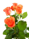 Bouquet of beautiful roses — Stock fotografie