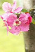 Beautiful spring blossom, outdoors — Stock Photo