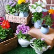 Flowers in decorative pots and garden tools on green grass, on bricks background — Stock Photo #51113543