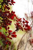 Leaves on bush in the garden — Stock Photo
