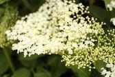 Beautiful wild flowers, outdoors — Stock Photo