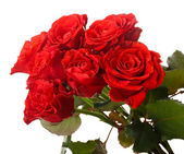 Bouquet de belles roses — Photo