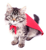 Cat in red cloak, isolated on white.  — Stock Photo