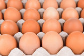 Eggs in paper tray close-up — Stock Photo