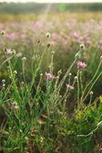 Hermosas flores en campo — Foto de Stock