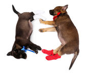 Sleeping puppies dressed in socks isolated on white — Stock Photo