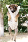 Puppy dressed in clothes for children and hung on the rope with clothes-pegs outdoor — Stock Photo