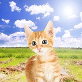 Cute little red kitten outdoors — Stock Photo