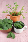 Brown round bowl and white metal mug of fresh mint leaves and cup of mint branches on pink wooden background — Stock Photo