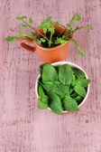 Brown round bowl of fresh mint leaves and cup of mint branches on pink wooden background — Stock Photo