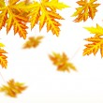 Vivid autumn maple leaves — Stock Photo #51433049