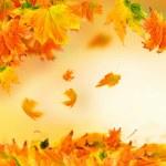 Vivid autumn leaves — Stock Photo #51433055