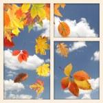 Vivid autumn leaves outside window — Stock Photo #51433075
