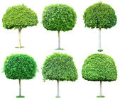 Collage green trees isolated on white — Stok fotoğraf