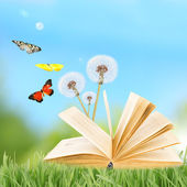 Old book with butterflies outdoors — Foto Stock