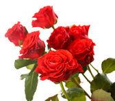美丽的玫瑰隔离在白色的花束 — 图库照片