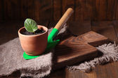 Germ at pot and scapula on wooden table close-up — Stock Photo