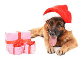 Funny cute dog in Christmas hat with gifts isolated on white — Stock Photo
