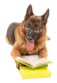 Funny cute dog with books isolated on white — Stock Photo