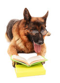 Funny cute dog with books isolated on white — Stock fotografie