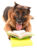 Funny cute dog with books isolated on white — ストック写真