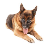 Funny cute dog in glasses isolated on white — Stock Photo