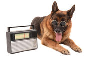 Funny cute dog with radio isolated on white — Stock Photo