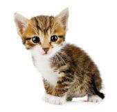 Cute little kitten, isolated on white — Stockfoto