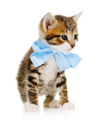 Cute little kitten with bow isolated on white — Stock Photo