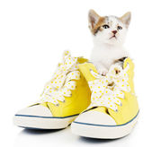 Cute little kitten in shoes isolated on white — Stock Photo
