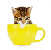 Cute little kitten in cup isolated on white — Stock Photo