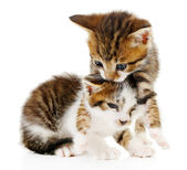 Cute little kittens isolated on white — Stock Photo