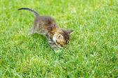 Cute little kitten on grass outdoors — Stock Photo