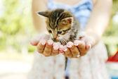 Süße kleine kätzchen in händen im freien — Stockfoto