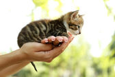 Cute little kitten in hands outdoors — Stock Photo