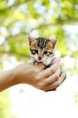 Cute little kitten in hand outdoors — Stockfoto