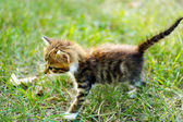 Cute little kitten on grass outdoors — Stock Photo