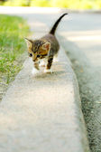 Cute little kitten outdoors — Stock Photo