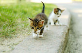Cute little kittens outdoors — Stock Photo