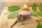 Dry up plants on scrapbook — Stock Photo