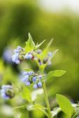 красивые полевые цветы — Стоковое фото
