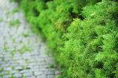 Bushes in green park — Stock Photo