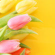 Many colorful tulips on the color background — Stock Photo #6677509