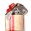 Funny kitten in golden gift box isolated on white — Stock Photo #7295189