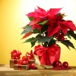 Beautiful poinsettia in flowerpot, gifts and Christmas balls on wooden tabl — Stock Photo #8589035