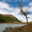 Tree at the river bank — Stock Photo